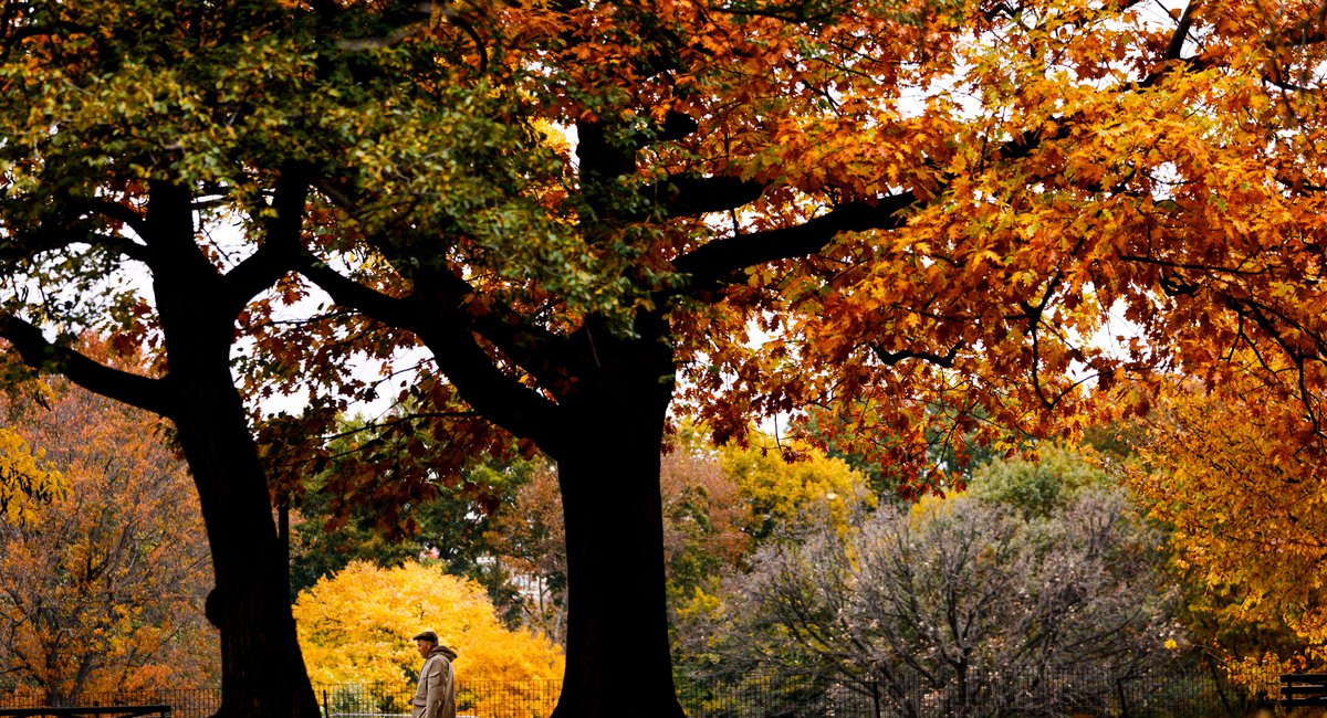 2020 Fall Foliage Map Shows You Where To Score The Best Anthocyanin In NY State